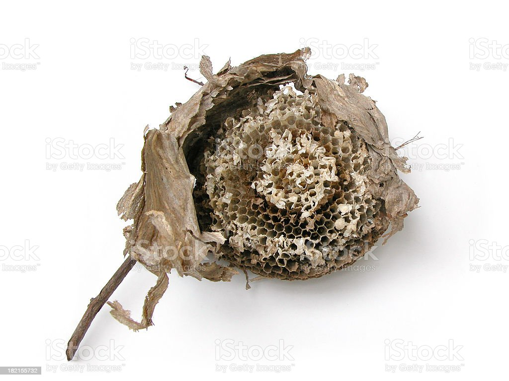 Wasp Nest, front royalty-free stock photo