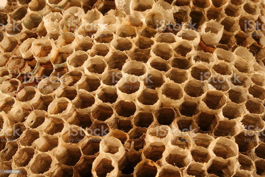 Wasp Nest zbiór zdjęć royalty-free