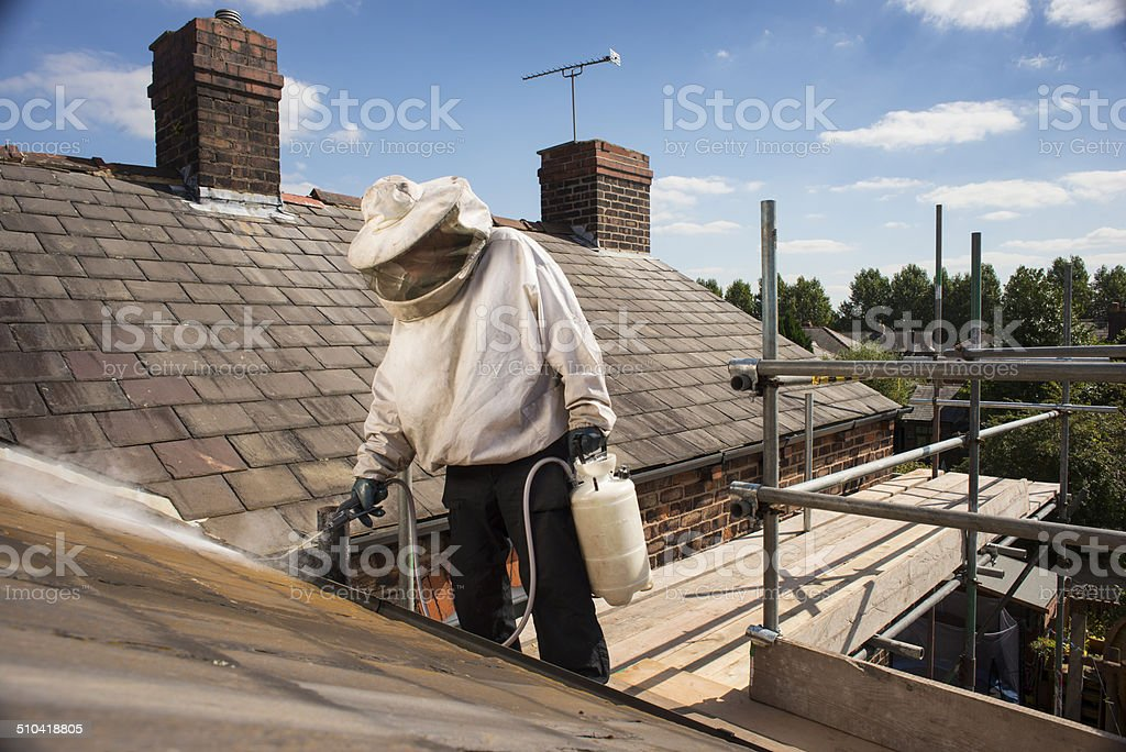 wasp nest roof terminator stock photo