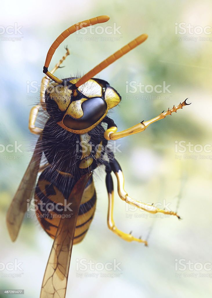 Wasp resting stock photo