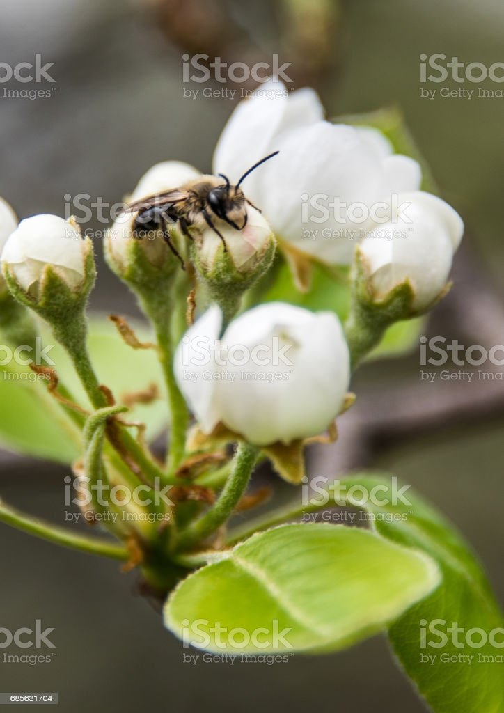 Wasp sleeping on a flower stock photo