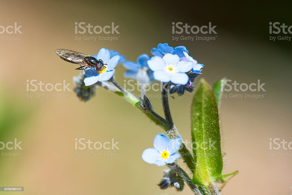 Wasp sucking from a flower stock photo