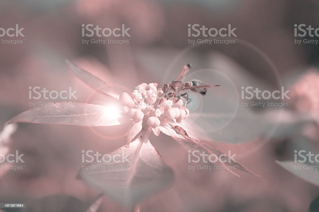 Wasp swarming Flowers. royalty-free stock photo