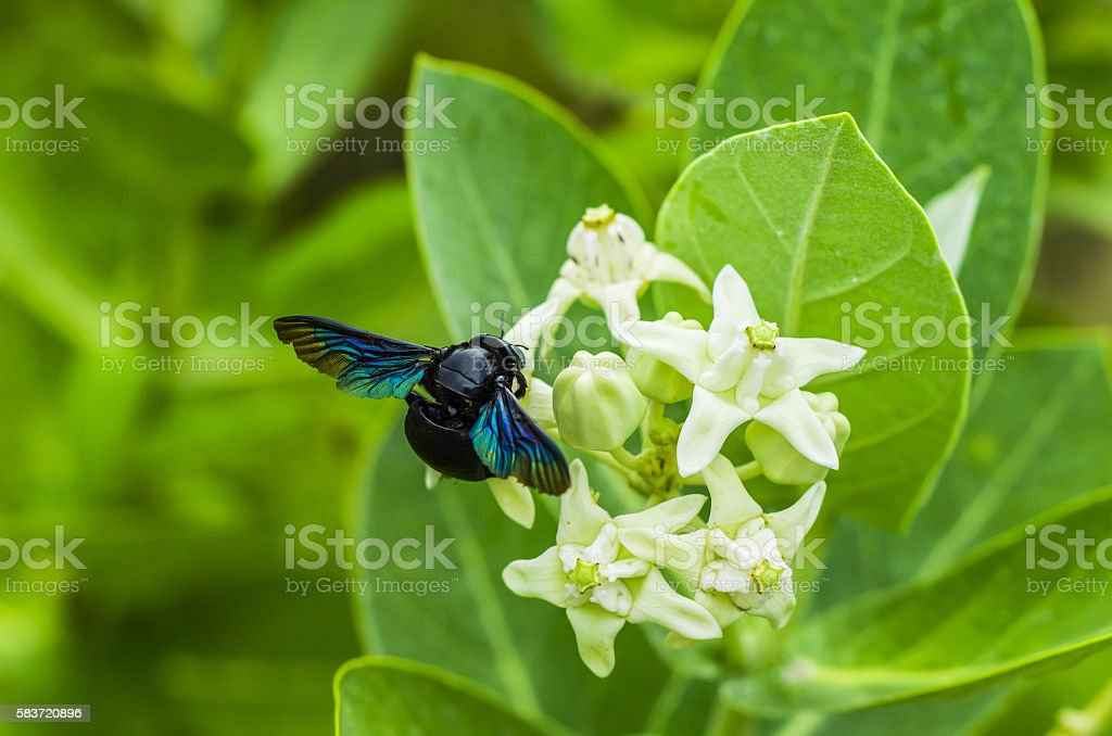 wasps and flower stock photo
