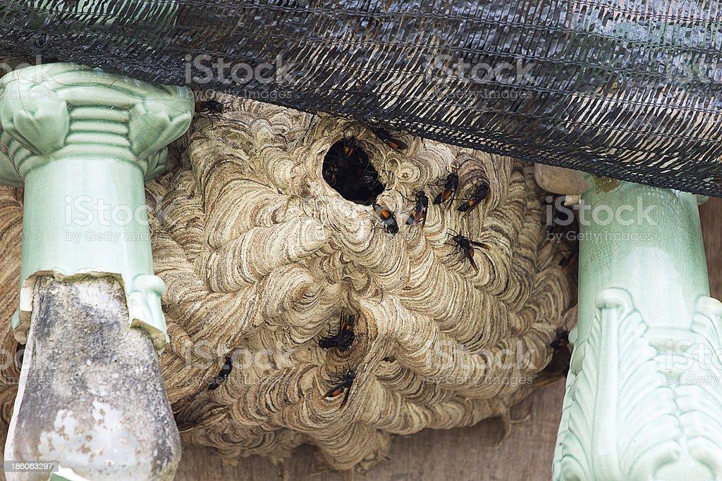 Wasps build nests royalty-free stock photo
