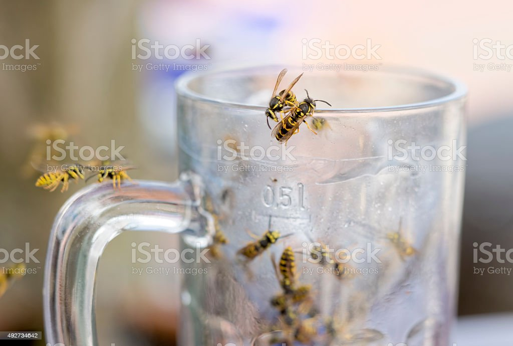 Wasps in glass of beer stock photo
