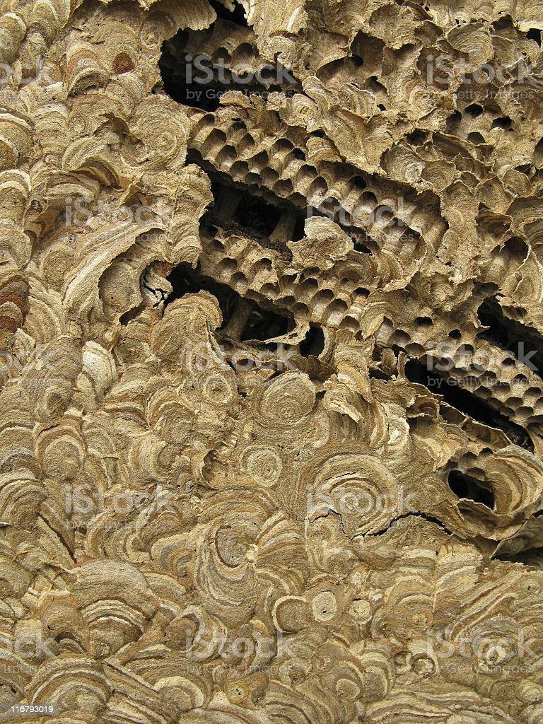Wasps' nest royalty-free stock photo