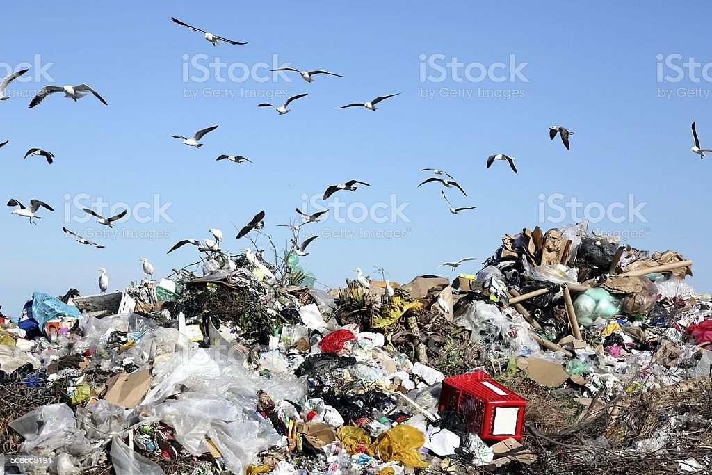 Waste Disposal Dump and Birds stock photo