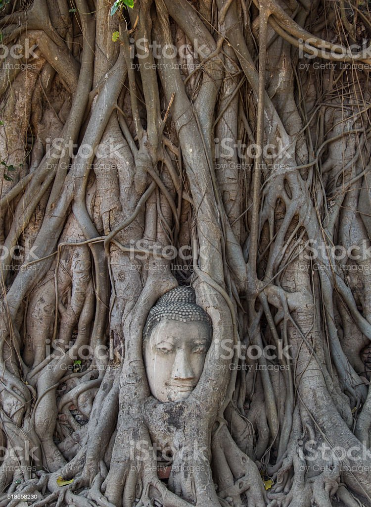 Wat Mahathat temple at Ayutthaya, Thailand stock photo