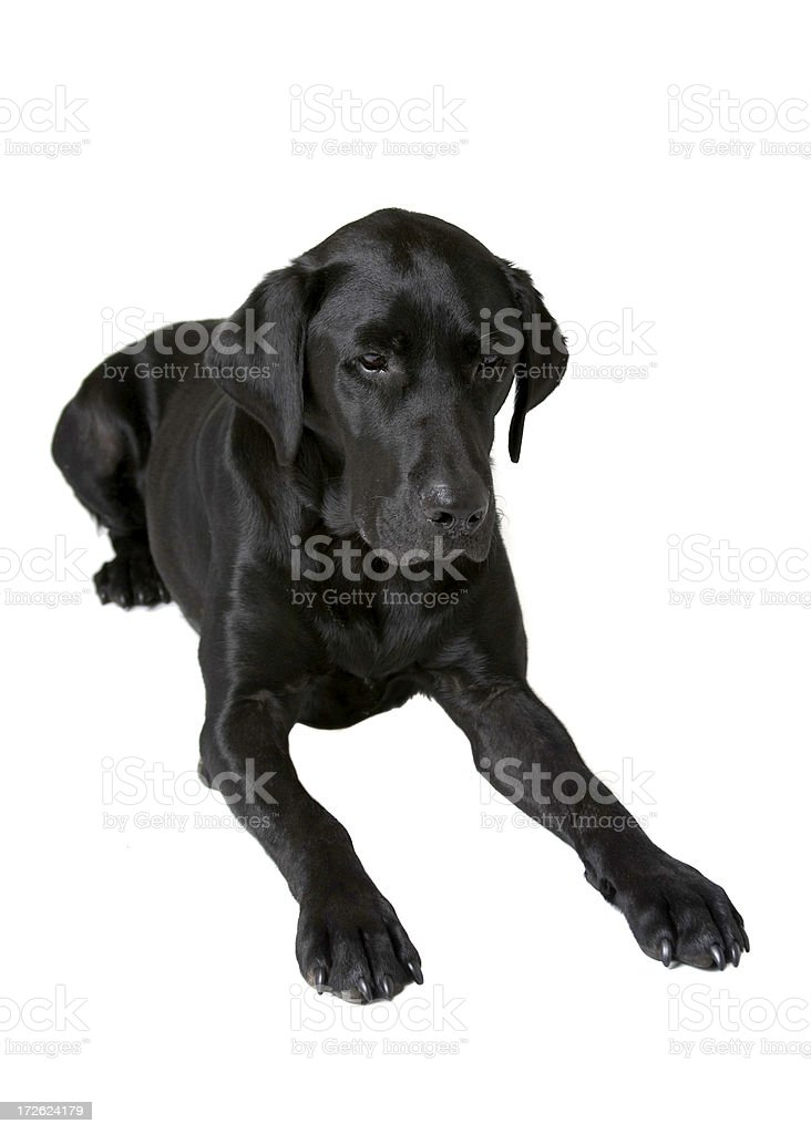 Watch Dog stock photo