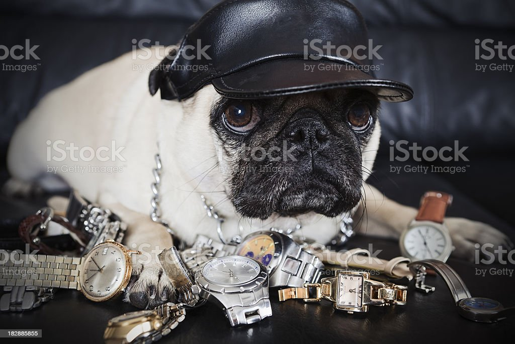 Watch Dog stock photo