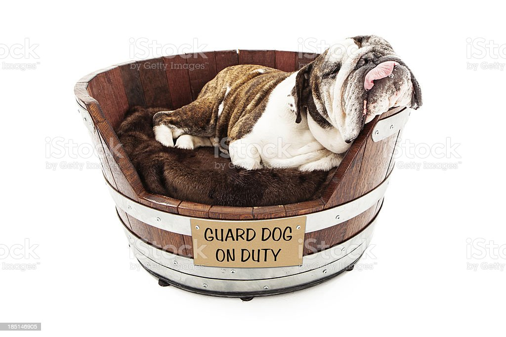 Watch Dog Sleeping on Job stock photo