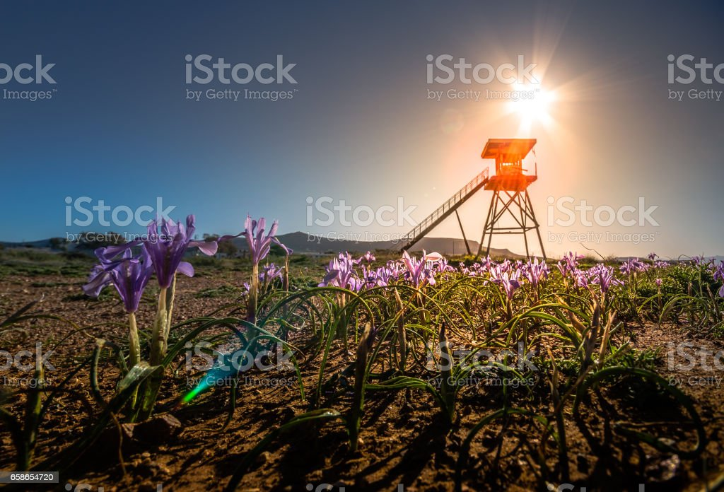 Watch tower in a field of colorful flowers and bright sun. stock photo