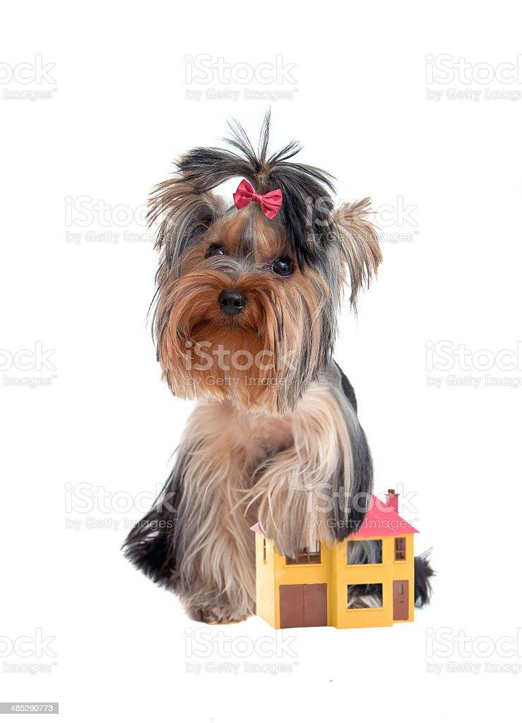 watchdog royalty-free stock photo
