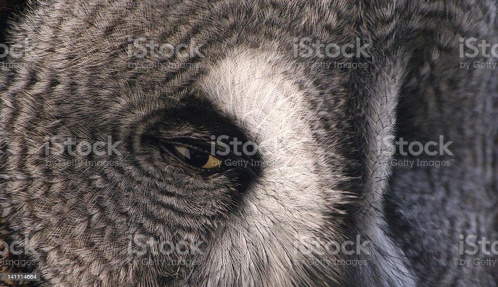 Watchful Eye royalty-free stock photo