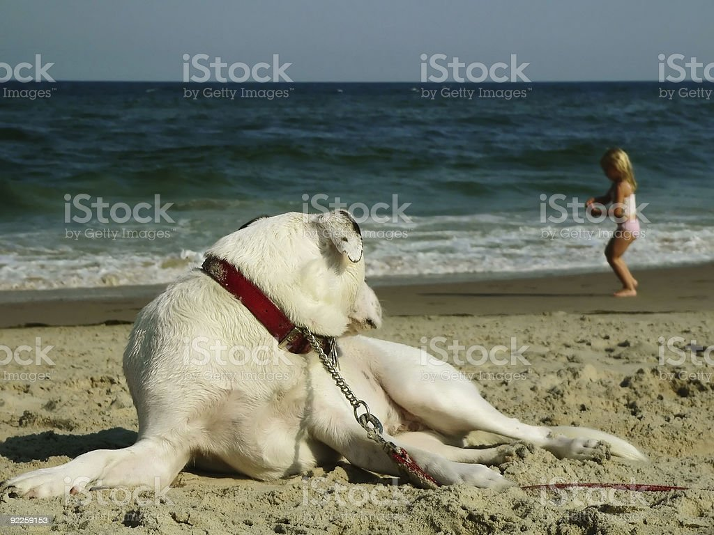 Watchful stock photo
