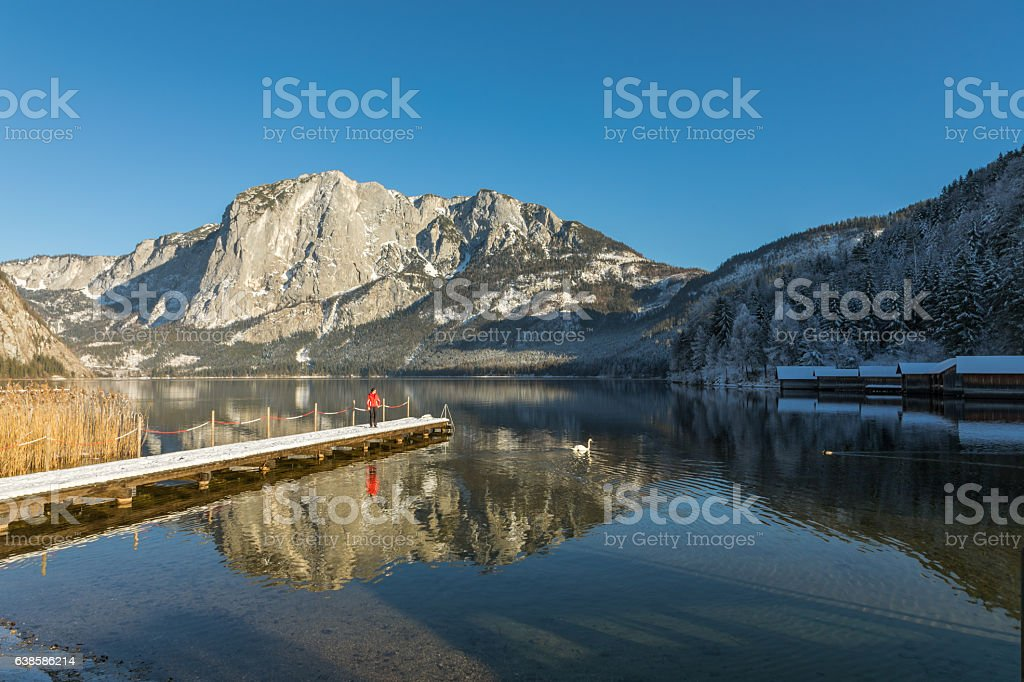 Watching a swan at Lake Altaussee, Austria stock photo
