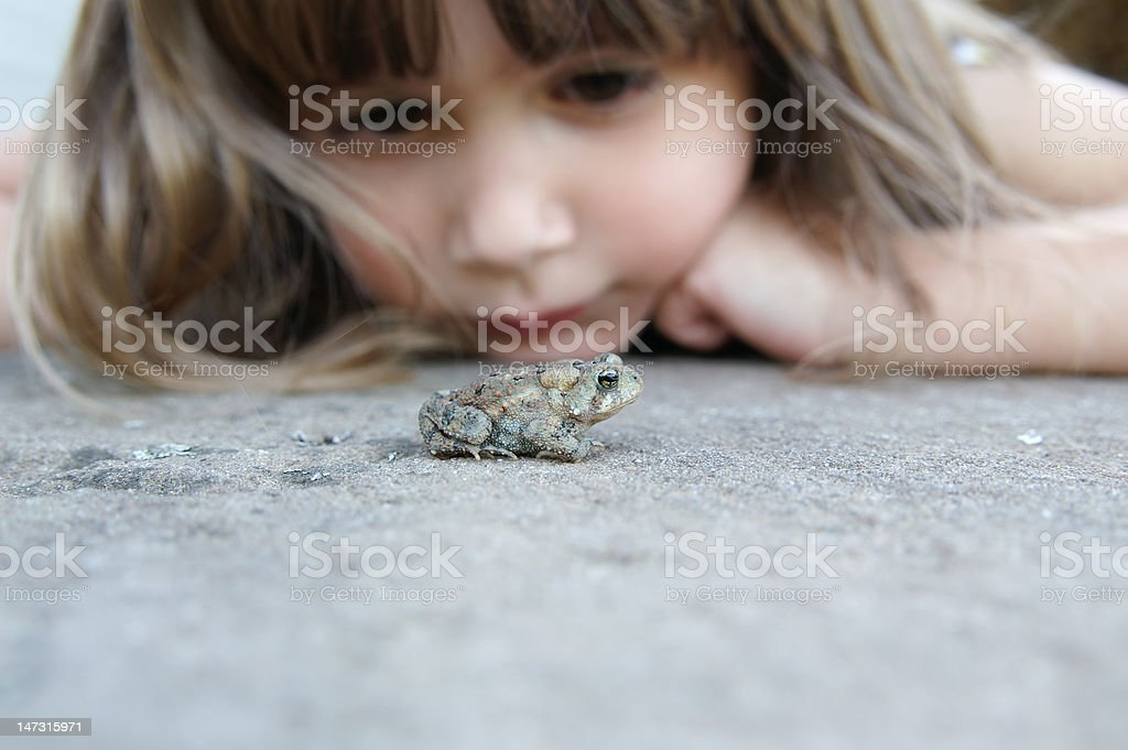 Watching a toad stock photo