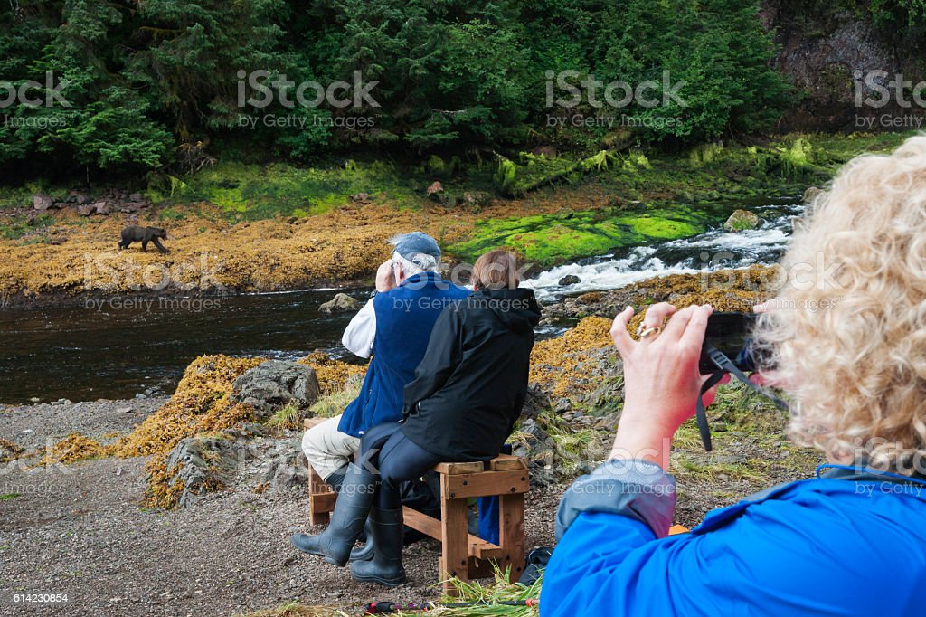 Watching grizzly bears in the wild stock photo