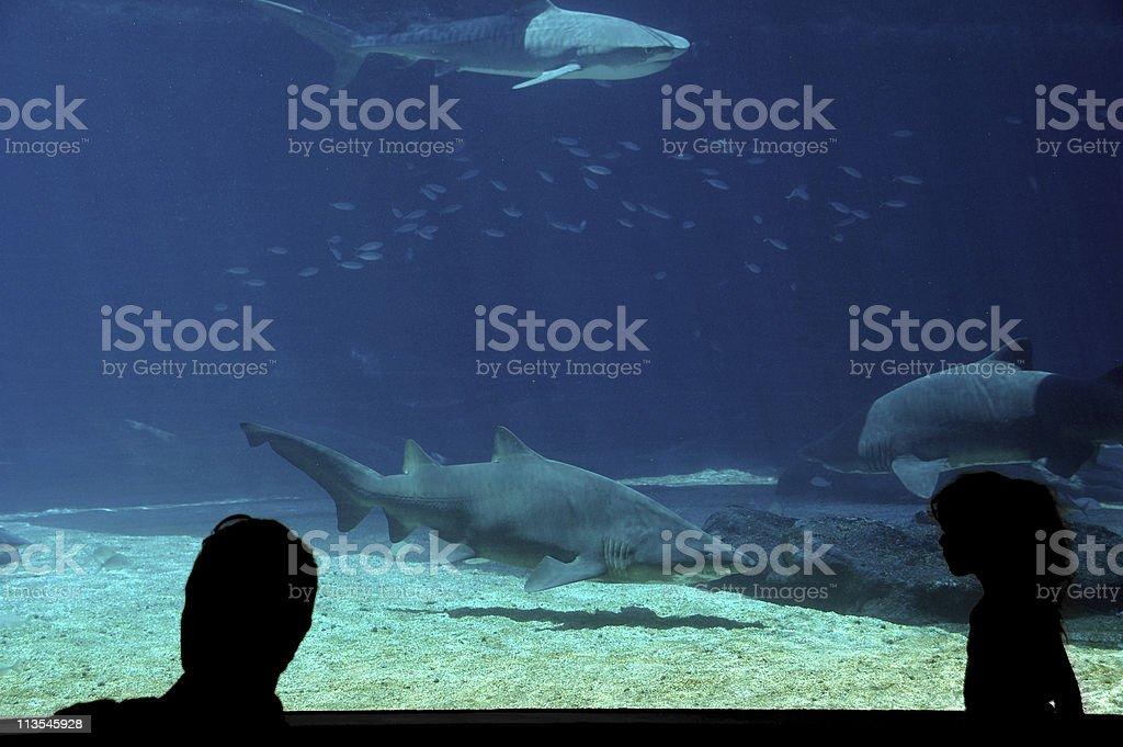 Watching sharks stock photo
