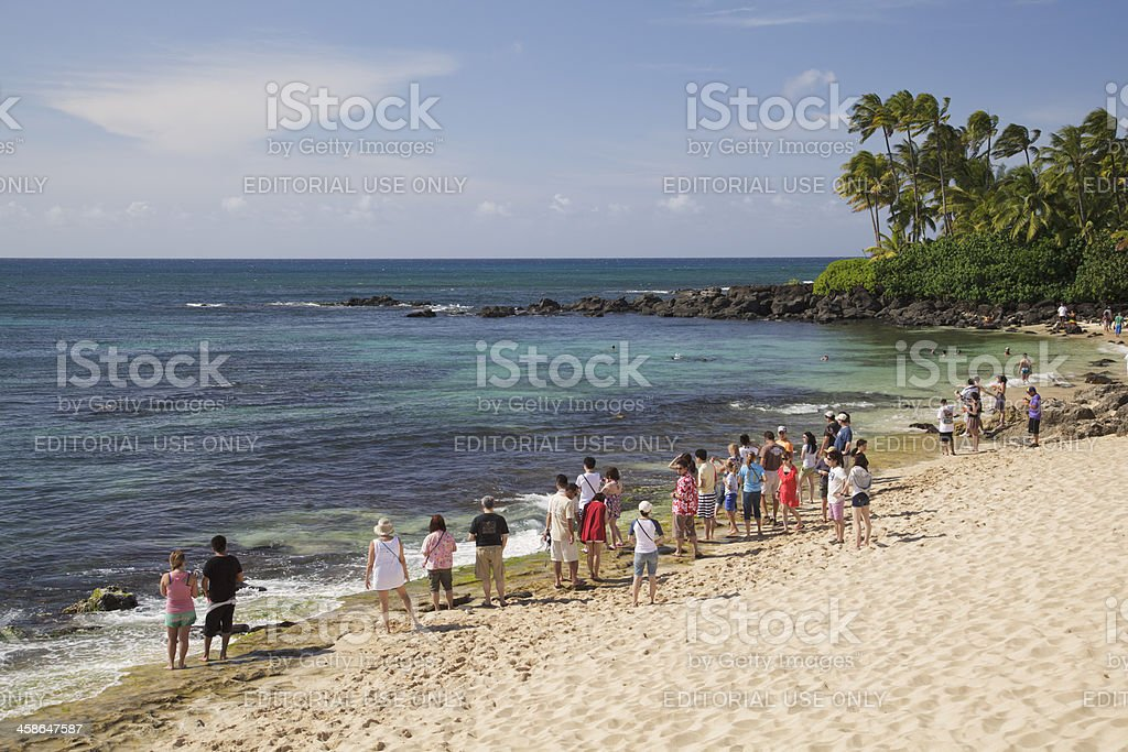 Watching turtles on Oahu's North Shore, Hawaii stock photo