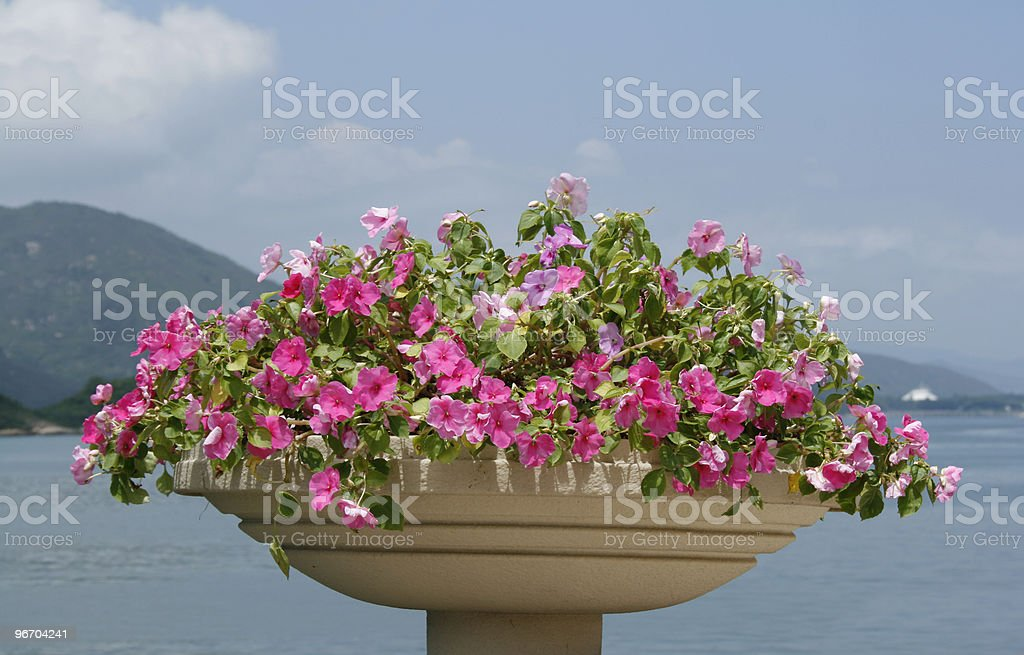 Watefront Blooming Flowers Pot royalty-free stock photo