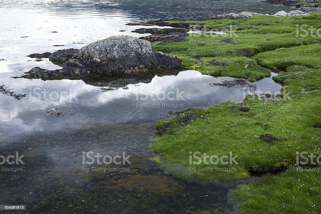Water And Grass Background royalty-free stock photo