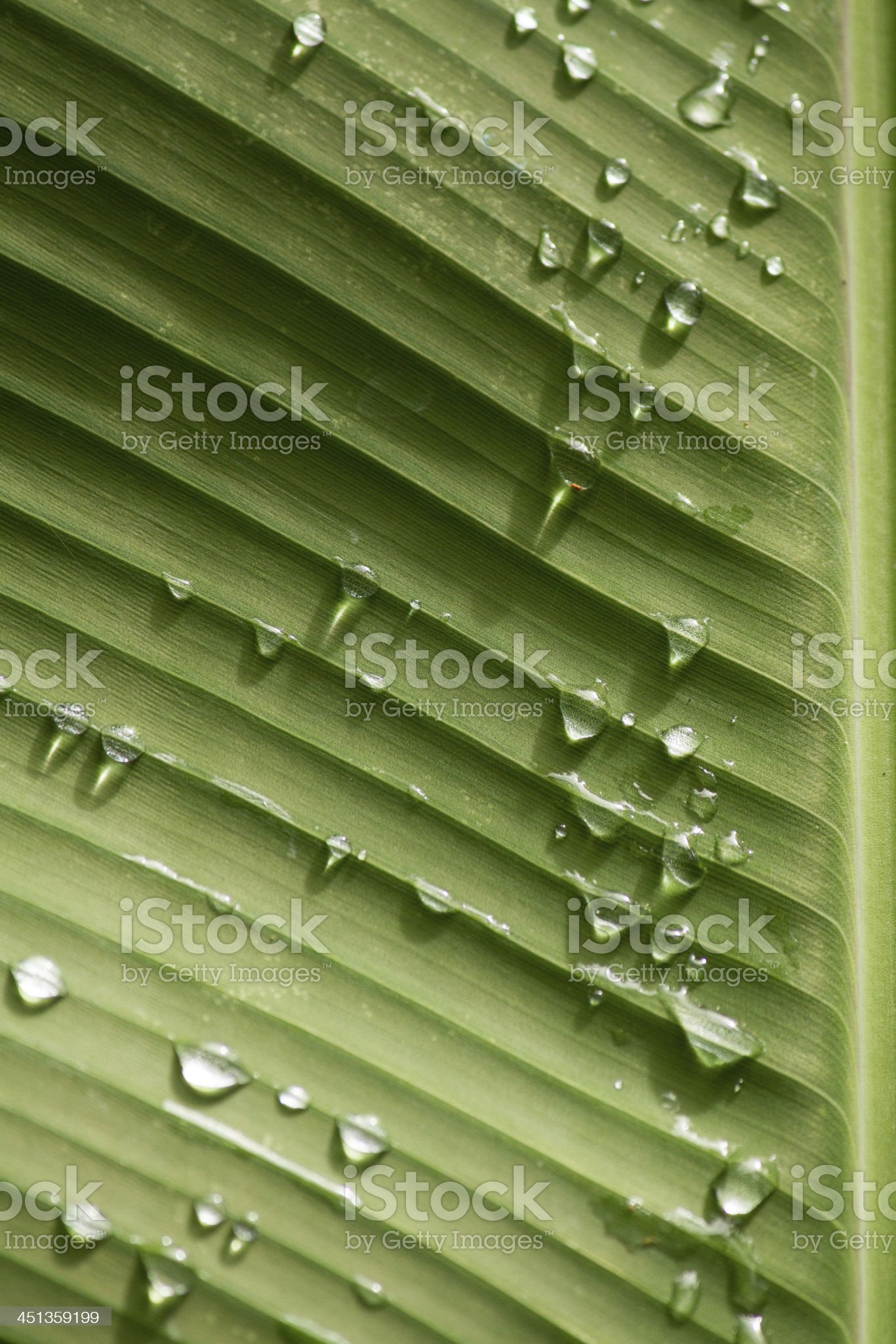 Water and Leaf royalty-free stock photo