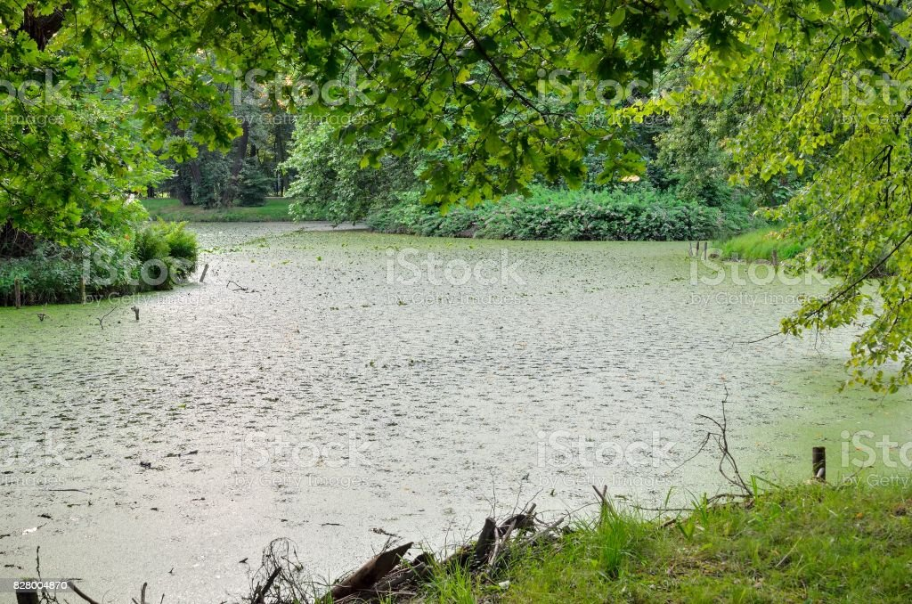 Water and plant in the park. stock photo
