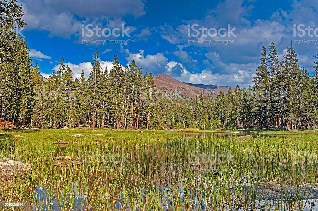 Water Basin in Yosemite National Park stock photo
