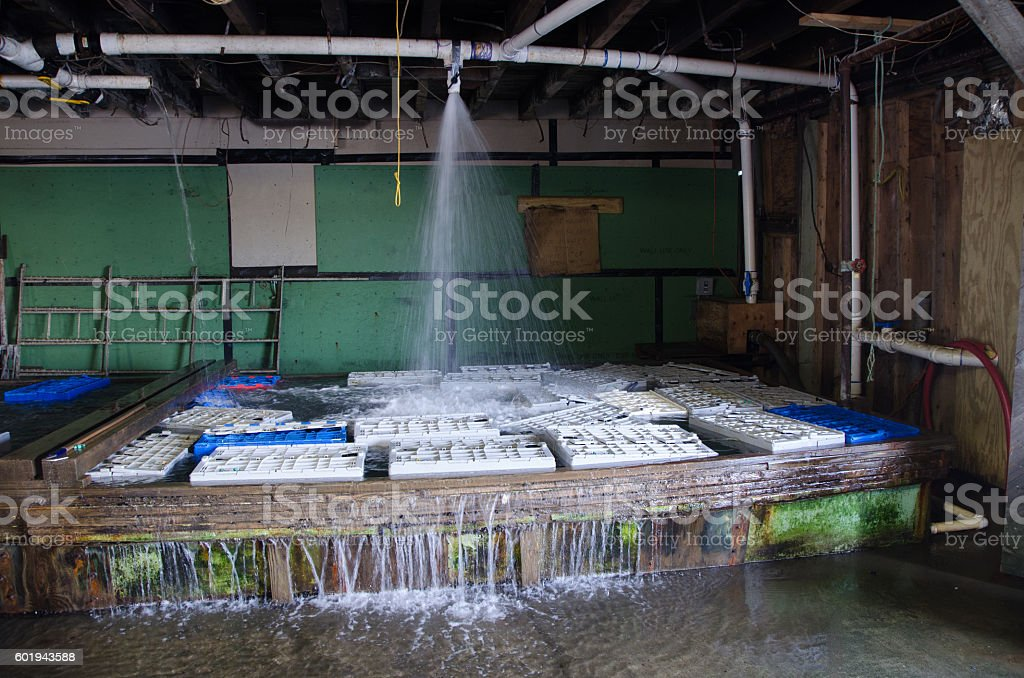 Water basin of a lobster pound stock photo