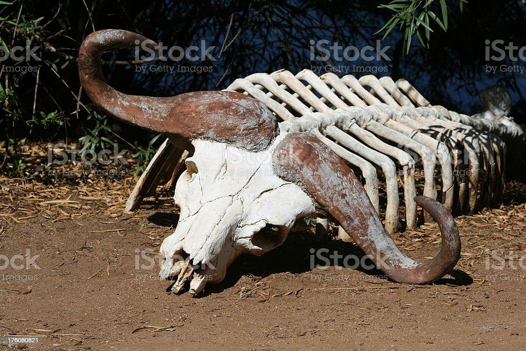Water Buffalo Carcass royalty-free stock photo
