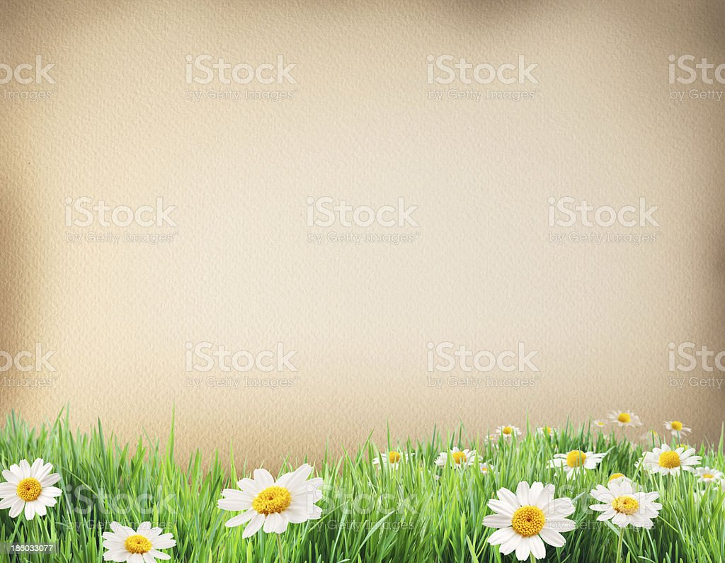 Water colour paper bodered with grass and flowers. royalty-free stock photo