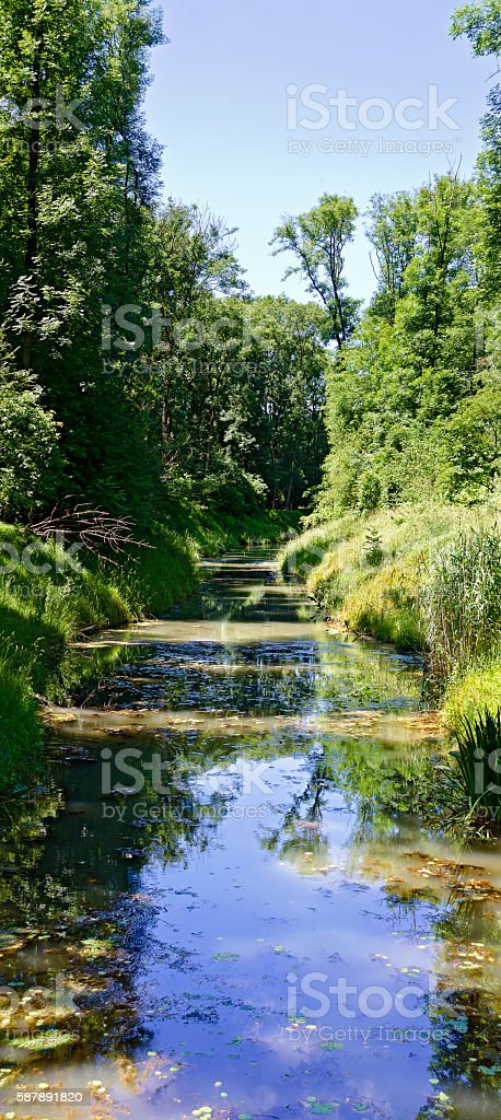 water course of an alluvial forest stock photo