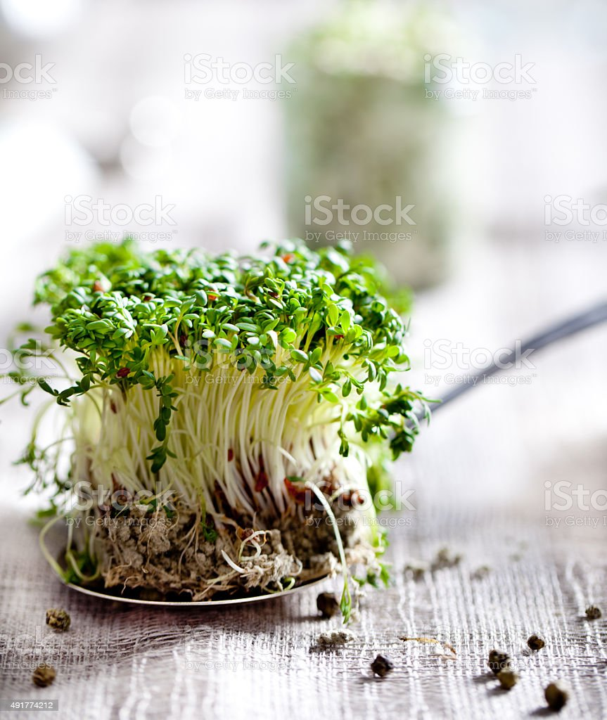 Water cress sprouts on a textile background stock photo