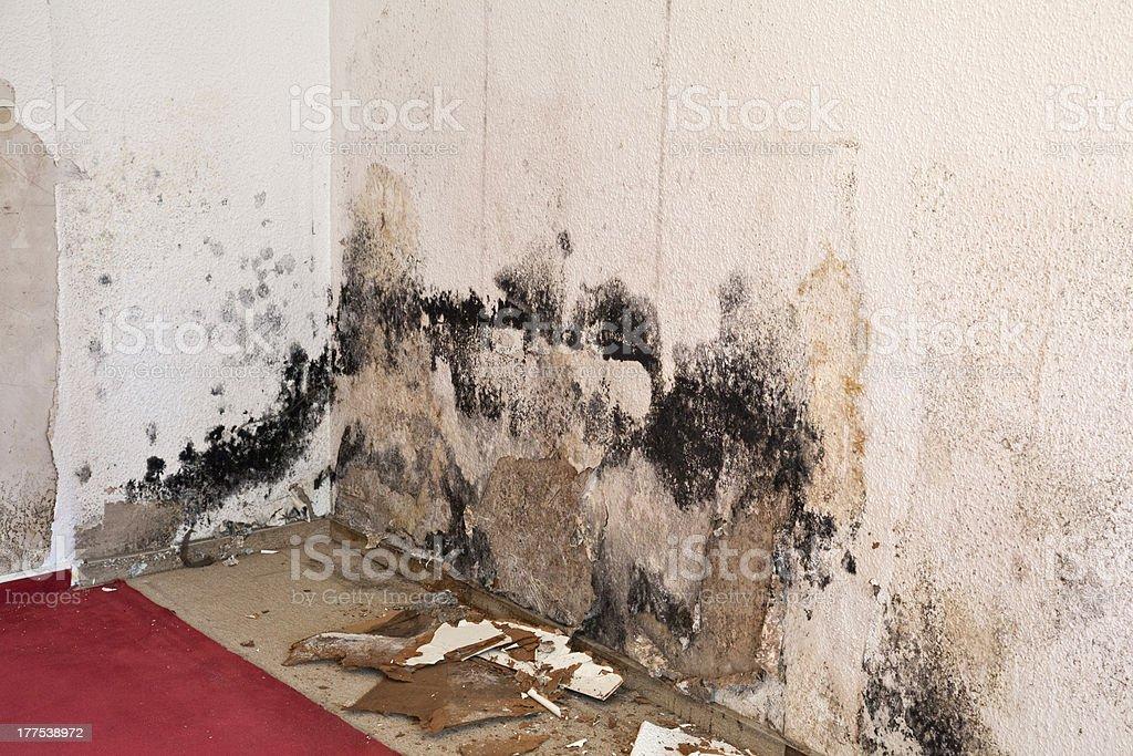 wallpaper in the living room full of mold schimmelpilz