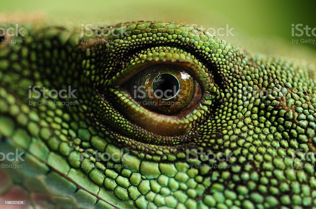 Water Dragons Eye stock photo
