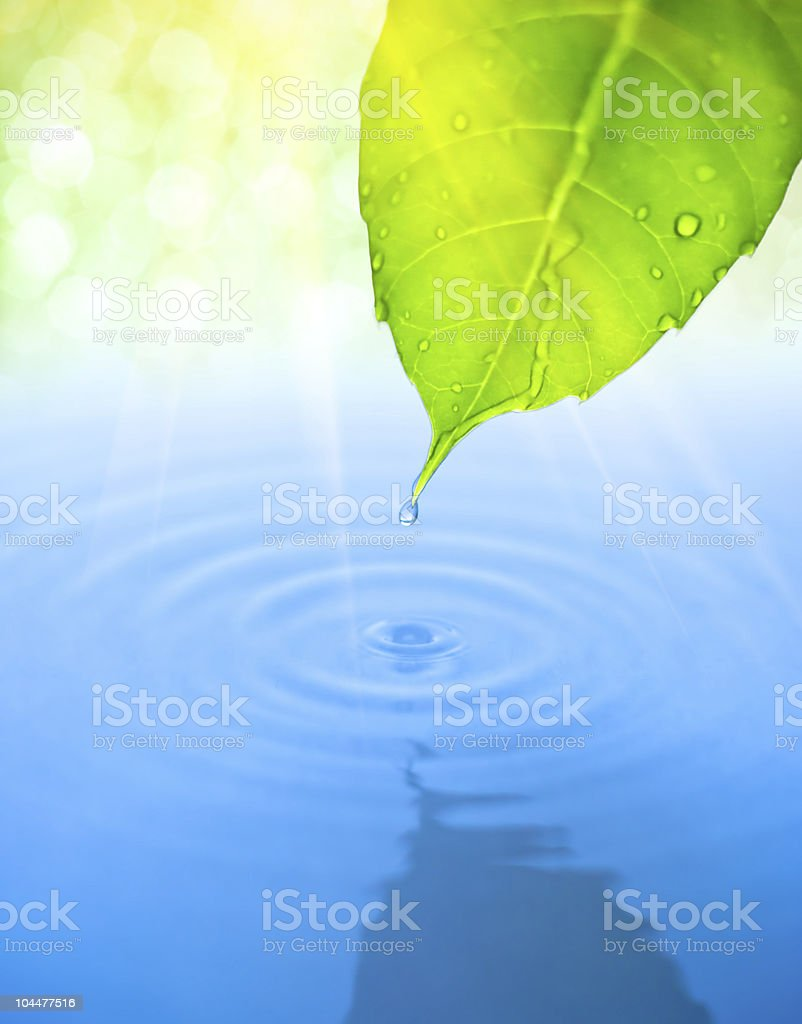 Water drop fall from green leaf with ripple stock photo