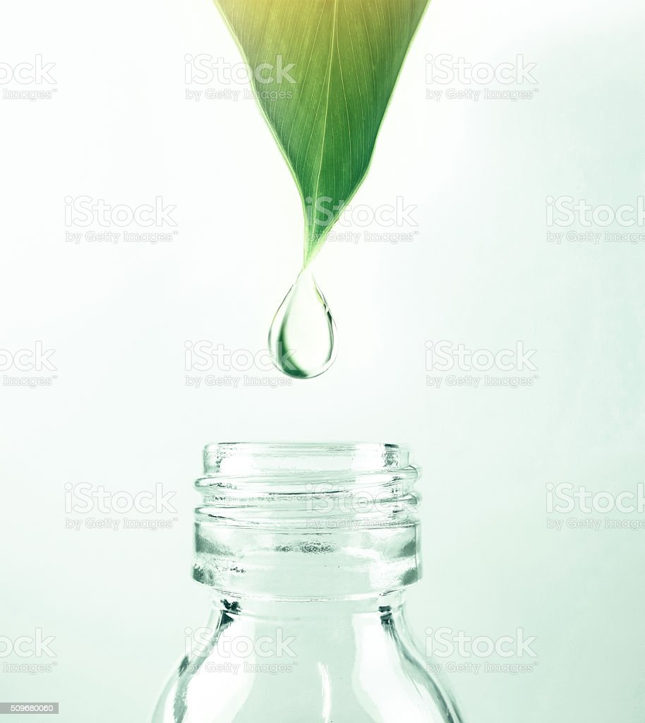 water drop from leaf to the bottle stock photo