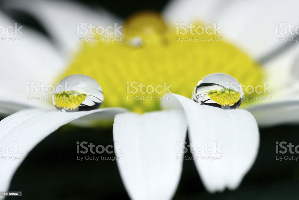 Water drop in nature royalty-free stock photo