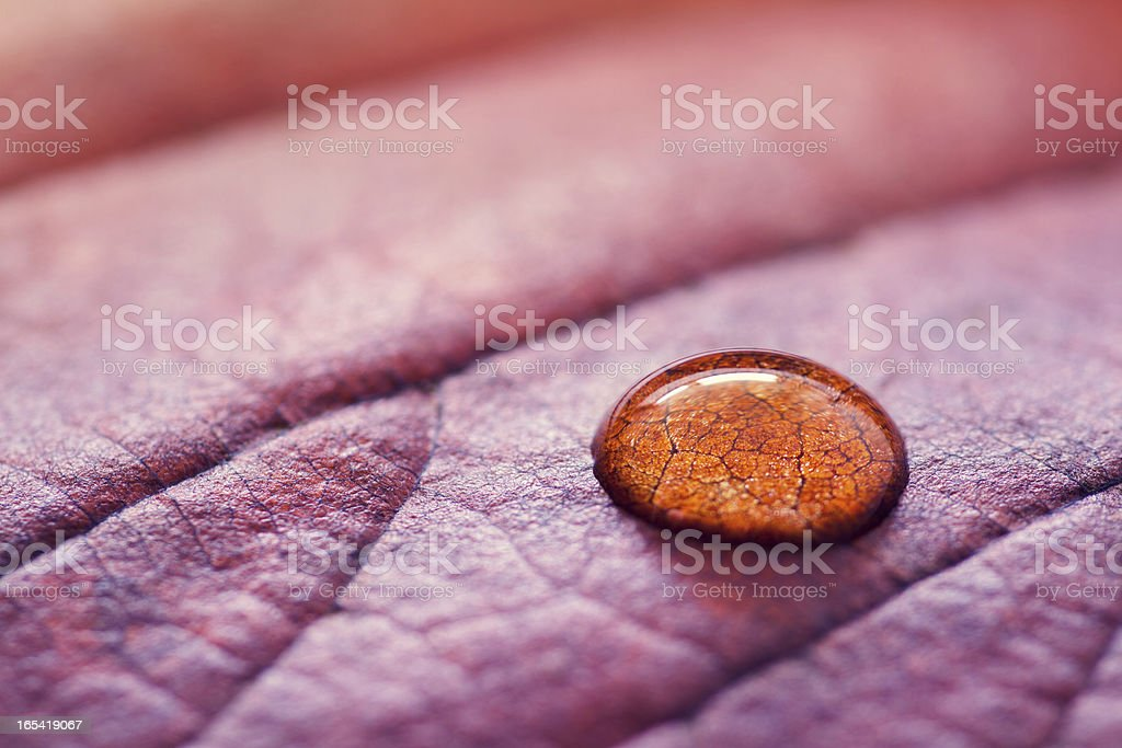 Water Drop On Autumn Leaf royalty-free stock photo