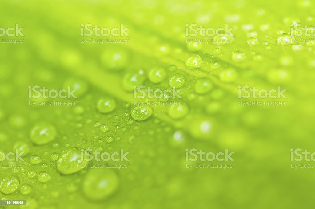 Water drop on green leave royalty-free stock photo
