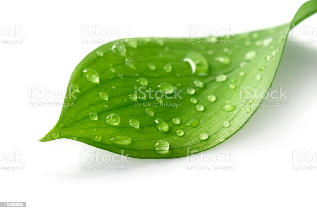 Water Drop on Leaf royalty-free stock photo