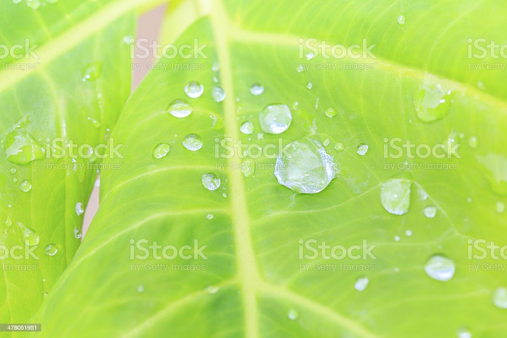 water drop on top of leaf royalty-free stock photo