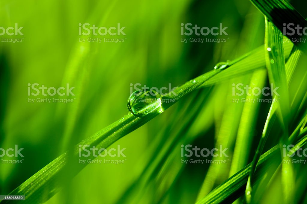 Water droplet on blade of grass royalty-free stock photo