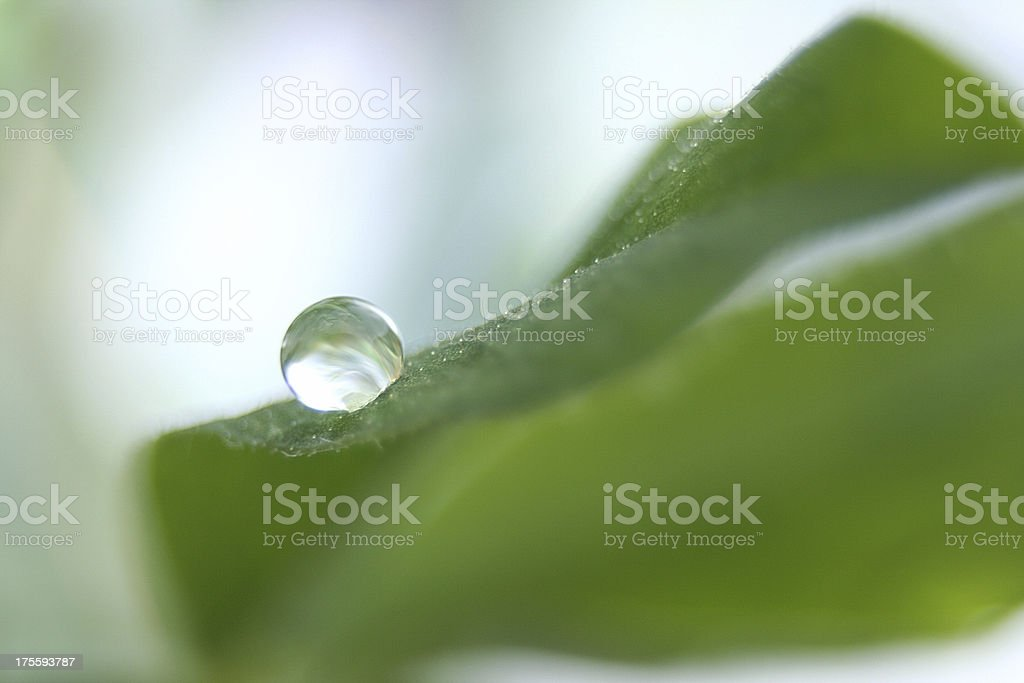 water droplet on leaf royalty-free stock photo