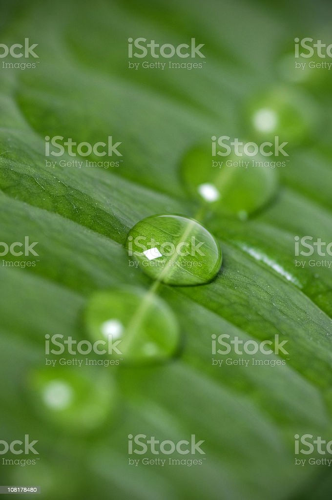 Water Droplets in a Row on Green Leaf royalty-free stock photo