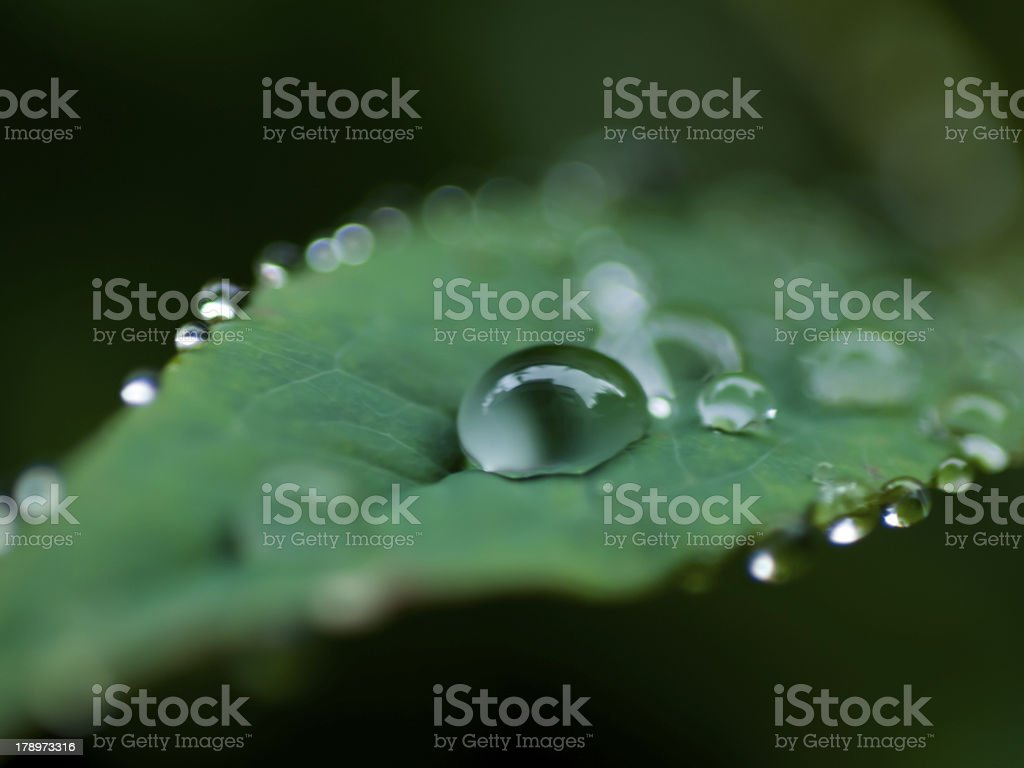Water droplets leaves3 royalty-free stock photo