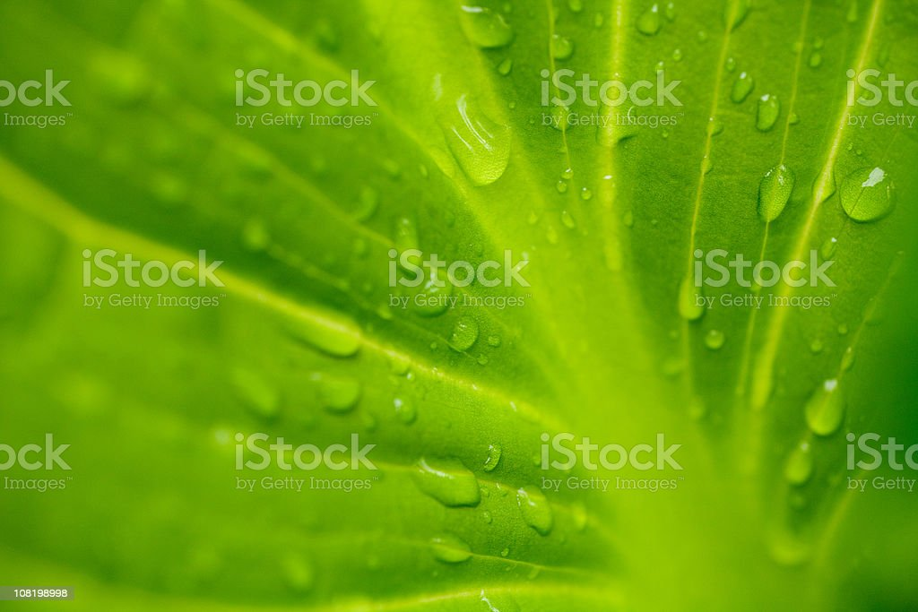 Water droplets on a leaf stock photo