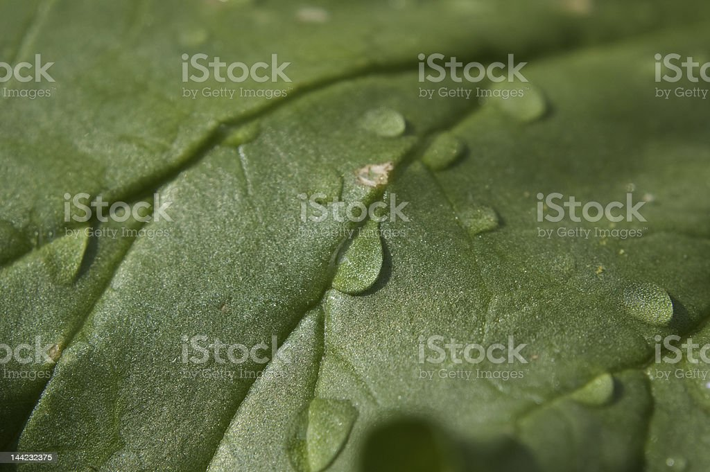 Water droplets on a leaf royalty-free stock photo
